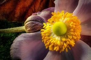 stacked-bourgeon-et-fleur-sur-mousse-verte