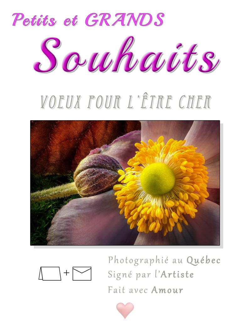 carte de souhaits - Petits et Grands Souhaits